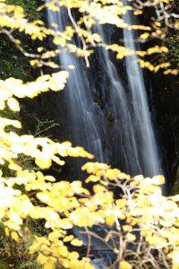 秋の小滝:当社代表岩本が撮影した写真です
