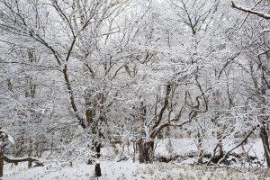 雪化粧:当社代表岩本が撮影した写真です