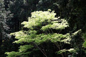 深緑に際立つ:当社代表岩本が撮影した写真です
