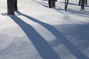雪上の長影